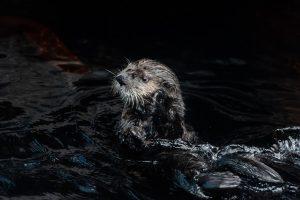 oceanário de lisboa, lontra, mamíferos marinhos, portugal, marinha