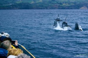 açores, baleias, terra azul, vila franca do campo, whale watching