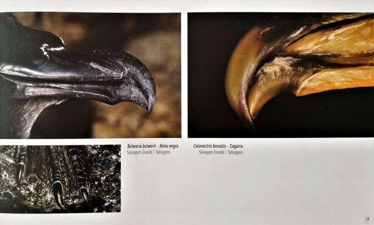Armaduras bocais duma Alma Negra e duma Cagarra (fotos PAulo Henrique Silva, Ilhas de Portugal)