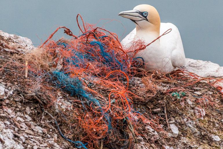 Vida marinha poluição