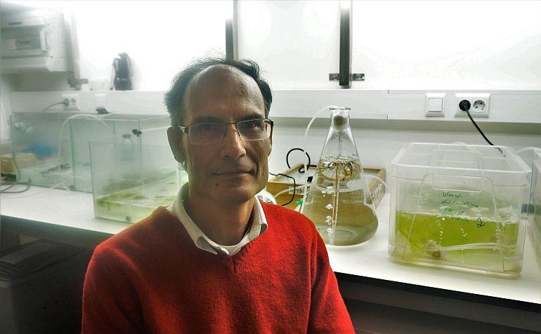 Leonel Pereira é docente da Faculdade de Ciências e Tecnologia da Universidade de Coimbra (FCTUC) e investigador do Centro de Ciências do Mar e do Ambiente (MARE).