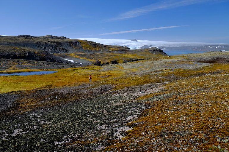A caminho do sítio de monitorização da vegetação KSJ1 do KOPRI, Ilha de Rei Jorge, Antártida, 7 fevereiro 2020, Gonçalo Vieira