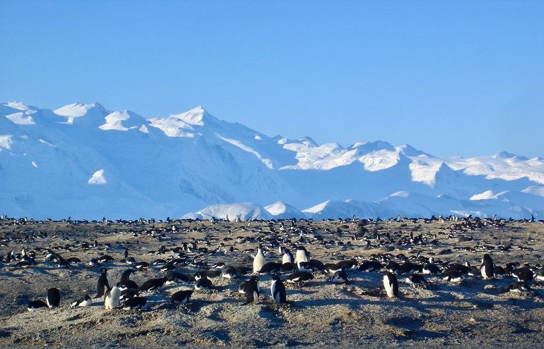 Colónia de Penguin da Adélia, Cabo Hallett, Terra de Vitória, Antártida 09 dezembro 2018, Mafalda Baptista