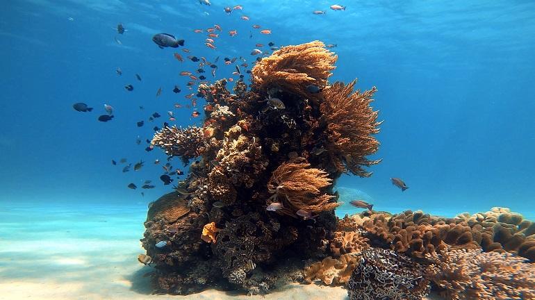 Ilha de coral e biodiversidade marinha à profundidade de 5 m, ao largo de Manatuto, Timor-Leste (imagem Rui Ferreira)