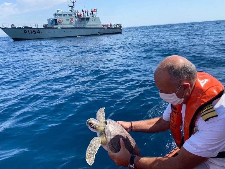 A Querubim prestes a ser devolvida ao mar pelo Comandante Rocha Pacheco (imagem Marinha Portuguesa)