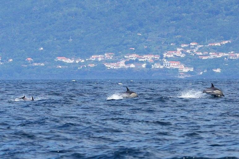 A Mafalda exclamou: - E ali vai um golfinho! (imagem SIARAM)