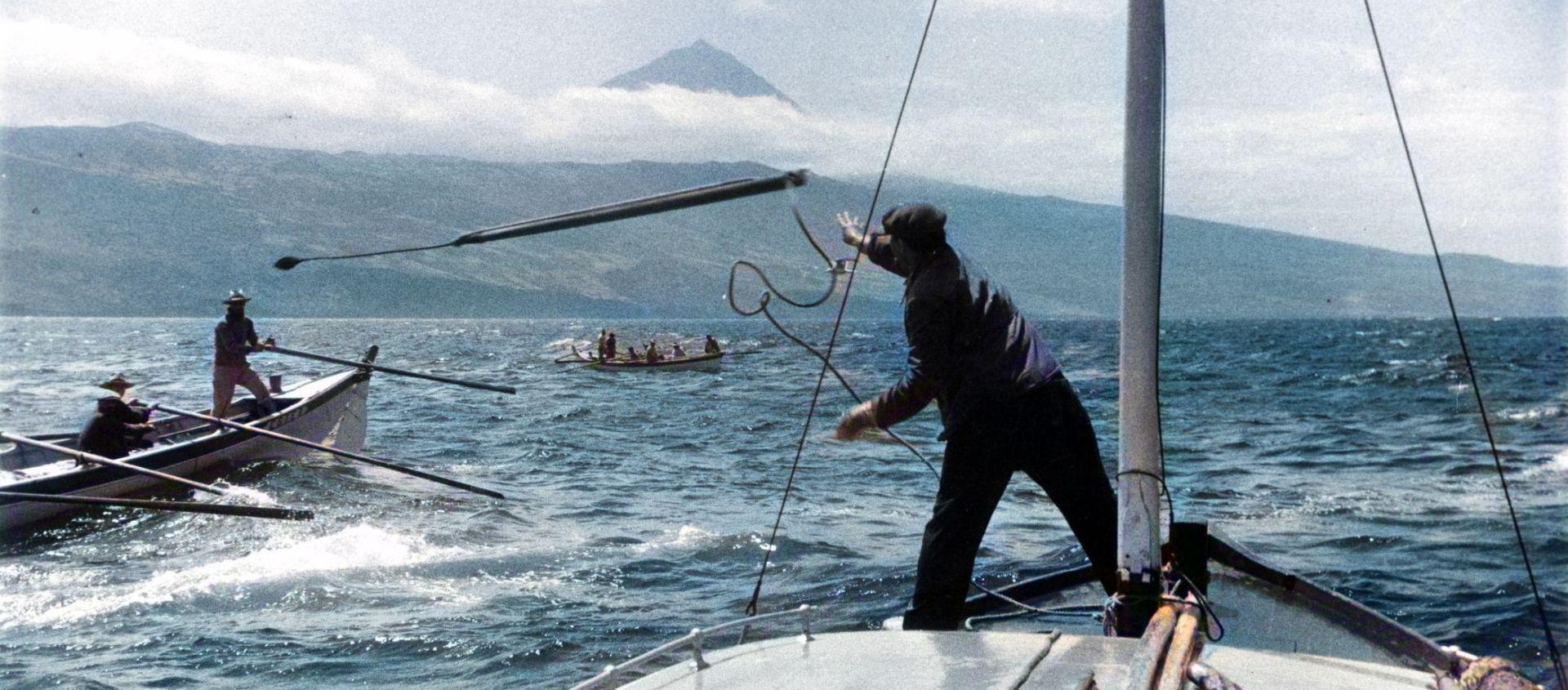 A singular história de um bote baleeiro do Faial