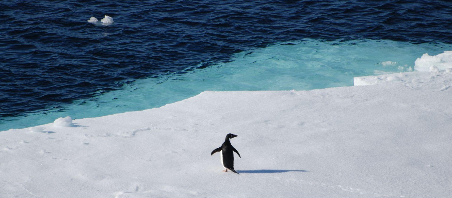 Microplásticos afetam os pinguins da Antártida há mais de 15 anos