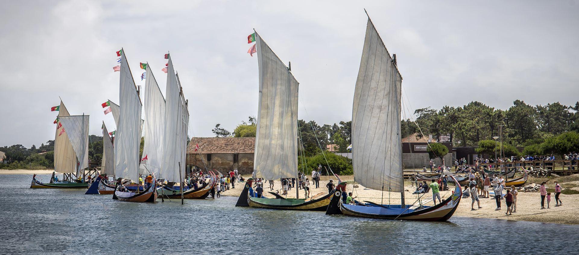 A Grande Regata de Barcos Moliceiros