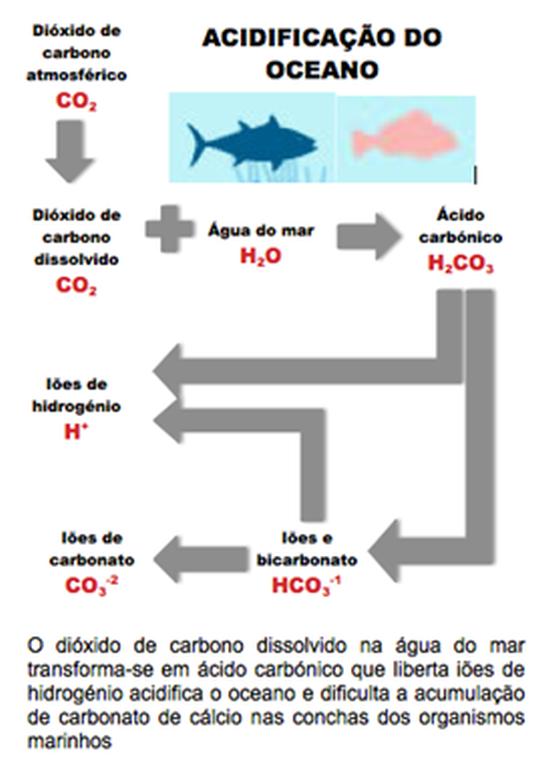 A acidificação do oceano aumenta com o acréscimo da concentração em dióxido de carbono na atmosfera provocada pela queima de combustíveis fosseis e compromete a biodiversidade marinha