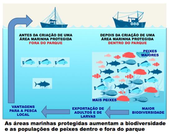 A criação de áreas marinhas protegidas garante a proteção do ambiente, o aumento da biodiversidade marinha, as atividades económicas sustentáveis e a produtividade das áreas envolventes.
